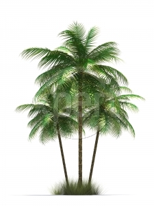 Stock palm tree